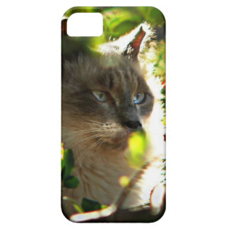 Halo in the Garden iPhone 5 Cases