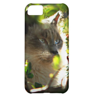 Halo in the Garden iPhone 5C Covers