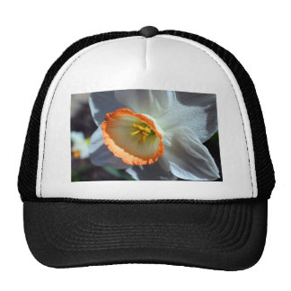 Halo Trucker Hat