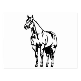 Halter American Quarter Horse Equestrian Postcard