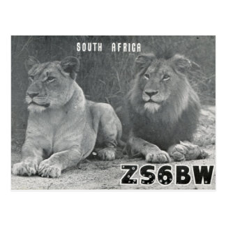 Ham Radio QSL Card South Africa Lions Postcard