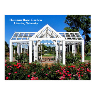 Hamann Rose Garden #256n  0256 Postcard