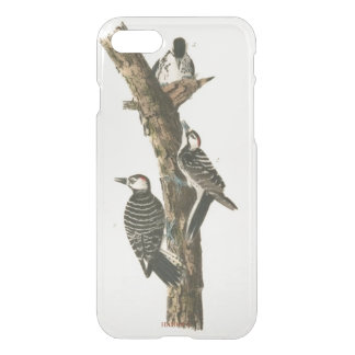 HAMbWG 6/6s Clearly™ Deflector Case - Woodpeckers
