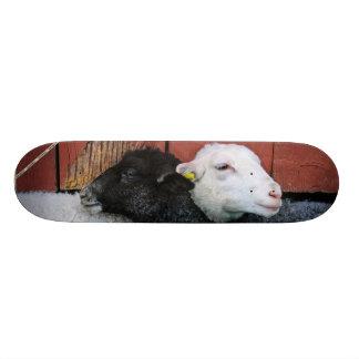 HAMbWG Black Sheep White Sheep Skateboard