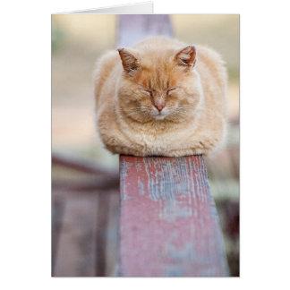 HAMbWG - Greeting Card - Cat on Rail