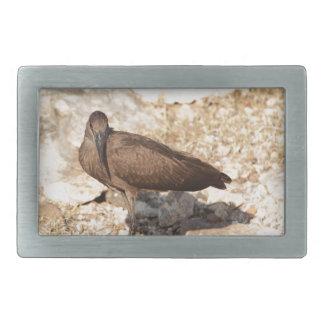 Hamerkop (Scopus umbretta) on a rock. Rectangular Belt Buckles