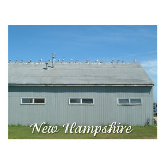 Hampton Beach, New Hampshire seagulls Postcard