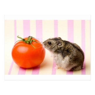 Hamster and tomato postcard