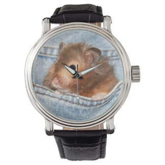 Hamster in blue jeans watch