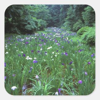Hana Shobu (Japanese Water Iris), Meiji Shrine, Square Sticker