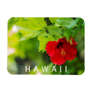 Hanalei Red Hibiscus Tropical Flower Rectangular Photo Magnet