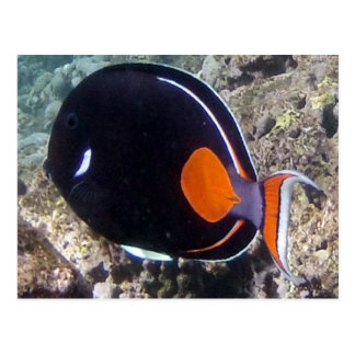 Hanauma Bay - Achilles Tang Fish Postcard