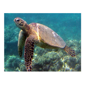 Hanauma Bay Hawaii Turtle Postcard