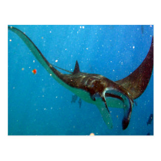 Hanauma Bay Oahu Manta Ray Postcard