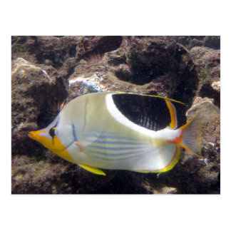 Hanauma Bay - Saddleback Butterfly Fish Postcard