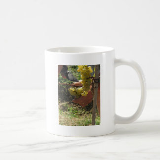 Hand cutting white grapes, harvest time coffee mug