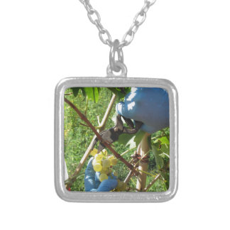 Hand cutting white grapes, harvest time silver plated necklace