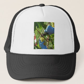 Hand cutting white grapes, harvest time trucker hat