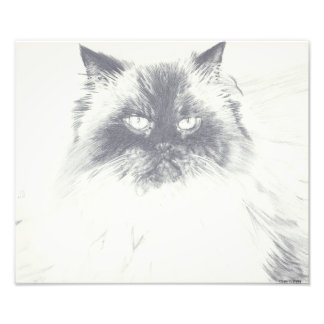 Hand Drawn Black and White Cat Photo Print