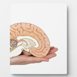 Hand holding brain hemisphere on white background plaque