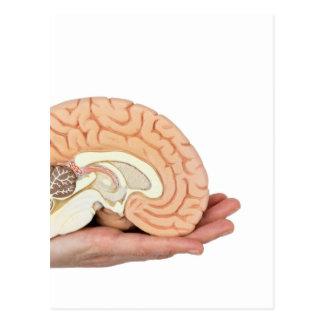 Hand holding brain hemisphere on white background postcard
