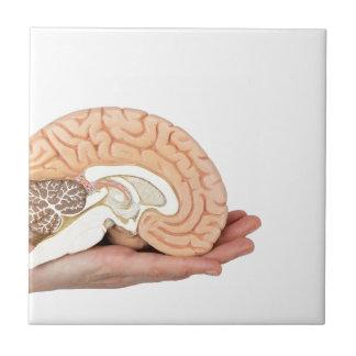 Hand holding brain hemisphere on white background tile