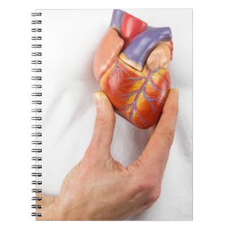 Hand holding model heart on chest spiral notebook