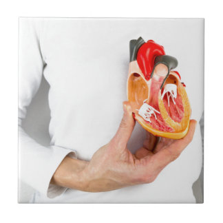Hand holds human heart model at body tile
