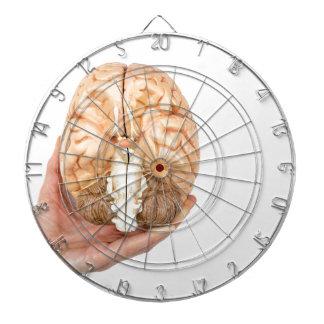 Hand holds model human brain on white background dartboards