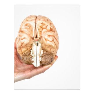 Hand holds model human brain on white background letterhead