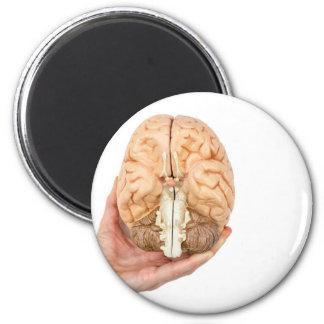 Hand holds model human brain on white background magnet