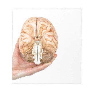 Hand holds model human brain on white background notepad