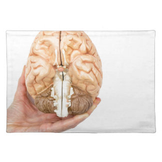 Hand holds model human brain on white background placemat