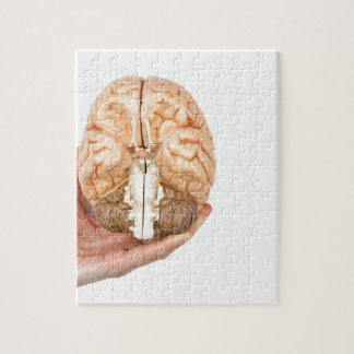 Hand holds model human brain on white background puzzles