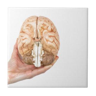 Hand holds model human brain on white background tile