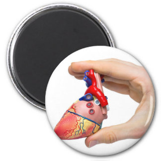 Hand holds model human heart between fingers 2 inch round magnet
