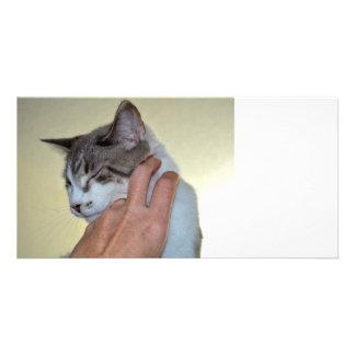 hand scratching kitten cute cat design photo greeting card