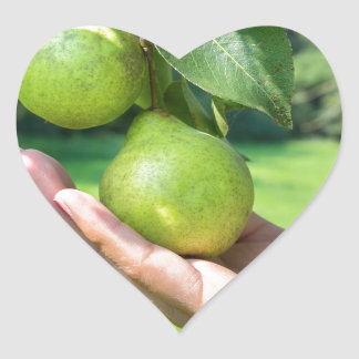 Hand showing branch with hanging green pears heart sticker