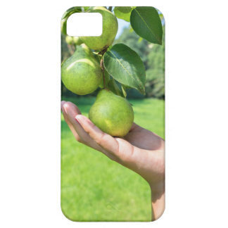 Hand showing branch with hanging green pears iPhone 5 case