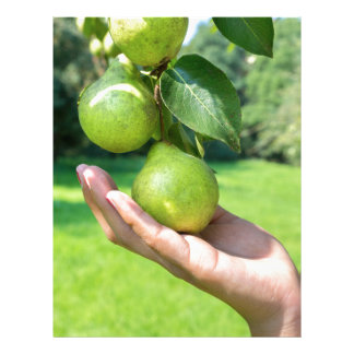 Hand showing branch with hanging green pears letterhead