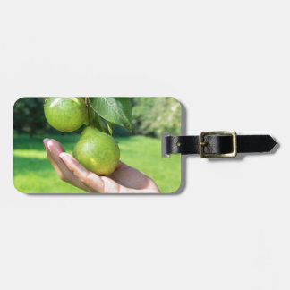 Hand showing branch with hanging green pears luggage tag