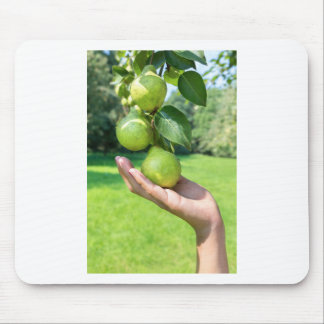 Hand showing branch with hanging green pears mouse pad