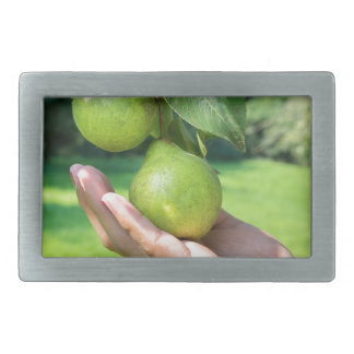Hand showing branch with hanging green pears rectangular belt buckle