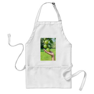 Hand showing branch with hanging green pears standard apron