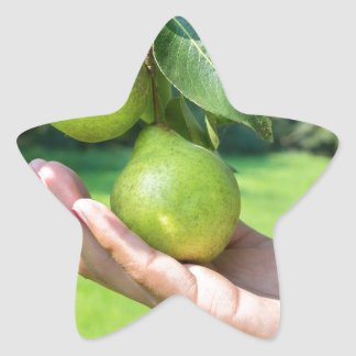 Hand showing branch with hanging green pears star sticker