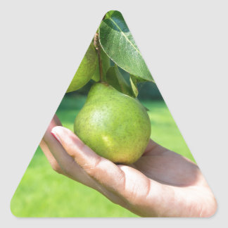 Hand showing branch with hanging green pears triangle sticker
