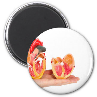 Hand with human heart model on white background.jp 2 inch round magnet