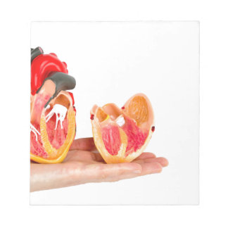 Hand with human heart model on white background.jp notepad