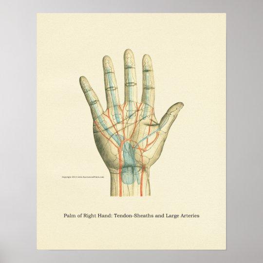 Hand & Wrist Internal Anatomy Poster
