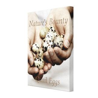 Handful of Quail Eggs. Nature's Bounty. canvas